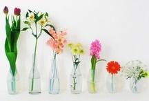 in bloom / where flowers bloom, so does hope / by Elizabeth Widder