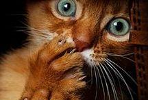 LIL kitties / by Aspen Silverotter