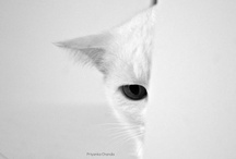 Cats / by Joel Sax