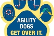 Canine Agility and Training / by Colleen Owens