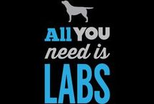 Labs - 3 colors, one breed!! / by Colleen Owens