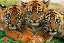 Wild Cats / by Colleen Owens