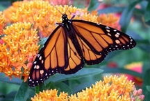 Butterfly Don't Fly Away, Fly Away / by Donna Knutson