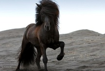 Wonderful Horses / by Stephanie Woodland