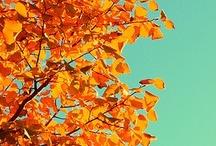 Falling into Autumn / by Vicki Horton