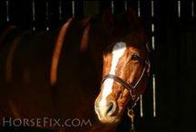 Equestrian Stuff / by Providence Farm