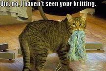 my kitties / by Kara Harbaugh