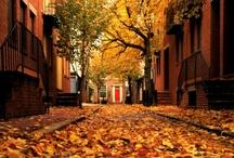 autumn / by saraelise