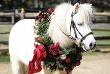 Christmas @ Hawk Hill / by Lindsay