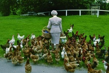 Chicken Chateaus - Creative Coops / Fun and fancy chicken coops. / by Lindsay