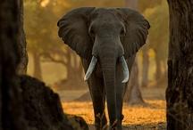 wildlife around the world / by Travelocity Travel