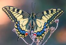 Butterflies and blossoms / by Rachel Patten