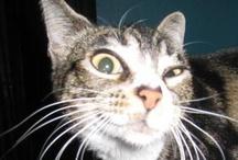 P3: Crazy Cats 2 / by Rachel Patten