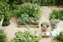 Garden / by Johanna Bradford