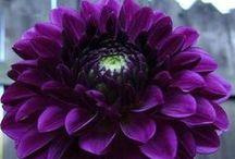 Flowers  / by Rachel Thompson