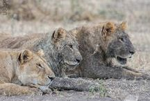 Thomson Safaris on Instagram / Photos from Thomson Safaris on Instagram. Follow us at http://instagram.com/thomsonsafaris / by Thomson Safaris