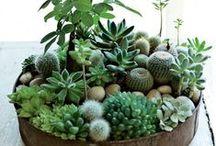 Garden delights / by Ann Friend