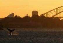 Australia / by Romina Power