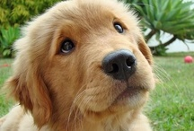 ILoveCuteAnimalsMoreThanAnythin' / I AM AN ANIMAL LOVER!!! / by Ashley Robinson