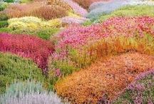 Landscape / by Tikeisha Harris