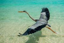 Birds for Machi / by Jenn Alexander
