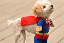 Puppy Stuff!! / by Wendi Hansen Murphy