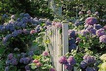 In My Garden / by Donna Reidland
