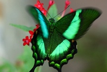 BUTTERFLY'S / by Sharon Ray