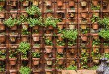 gardening / by Krista Partin