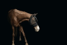 Echte Pferde!! / by Lyli Leyva