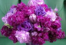 ♥♥Violet, Lavender, Purple, Lilac♥♥ / by Marilyn Martin