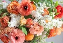 ♥Orange Peach Apricot Marmalade♥ / by Marilyn Martin