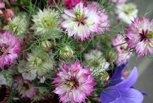 flowers / by www.Shady-Grove-Gardens.com