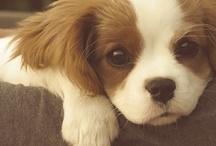 Tiny Puppy Dog