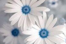 Flowers / by Rebecca Pederson Hessey