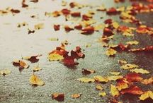 AUTUMN / by Beth Saunders