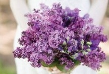 Lilacs / by Monica