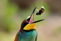 Birds! / I love birds! / by Patti Bartruff