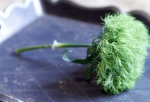 Green Trick Dianthus / by Monica