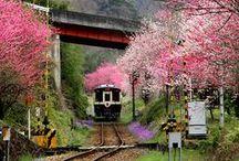 japan honeymoon / by Brianne Tomlin