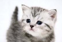 {kitties} / by Jess Gamble