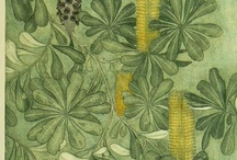 Green 4: Soothing Green / by Alisa Kensey