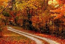 Autumn . Halloween / by Marcia Brake