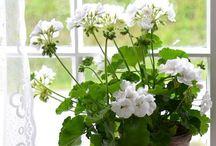 Indoor Gardening / by Bonnie Romano