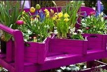 Contained  Garden Beauty / Container gardening to add interest and beauty to your yard / by Christine Steurer