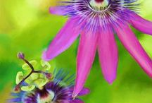 Blooming Beautiful / by Denise A.
