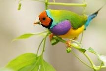 Birds & Birdhouses / by Janet Plank
