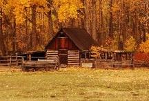 Autumn Splendor / by Janet Plank