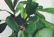 """In the Bush"" / by Musique (Gardening) / by Rachel Barnes"