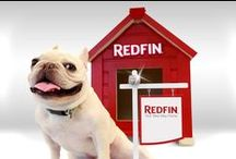 The Pets of Redfin / Pet photobombs from homes for sale on Redfin! / by Redfin